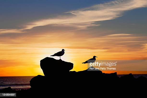 Sea Gulls At Sunset