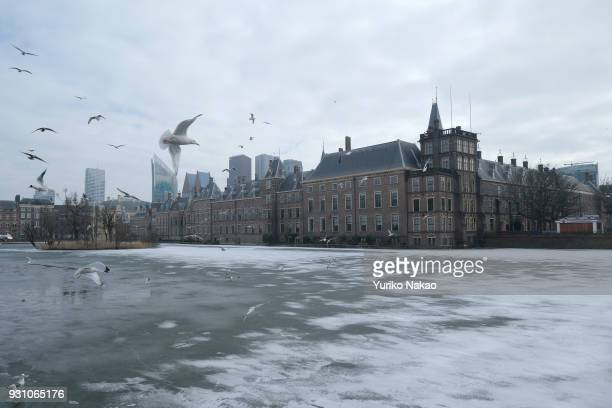 Sea gulls fly over the surface of Hofvijver or 'Court Pond' is frozen in front of Binnenhof on March 4 in The Hague The Netherlands