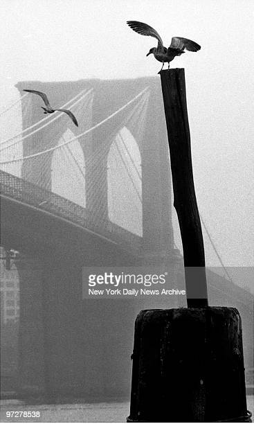 Sea gulls hangs around the foggy Manhattan side of the Brooklyn Bridge at the South Street Seaport.