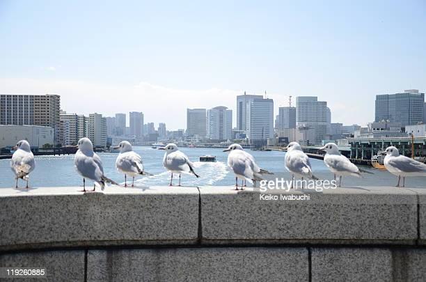 Sea gulls on bridge, Tokyo Japan