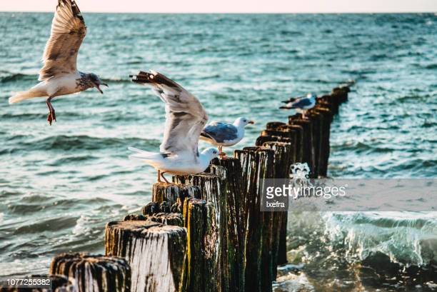 Sea gulls on wave barriers at the sea.