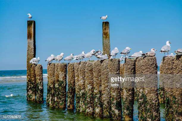 Sea gulls on wooden wave barriers at the sea.