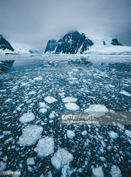 sea ice and the antarctic peninsula - 南極大陸探検 ストックフォトと画像