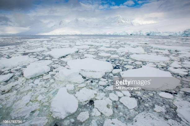 sea ice - pack ice stock pictures, royalty-free photos & images