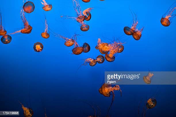 Sea life and jelly fish underwater the aquarium