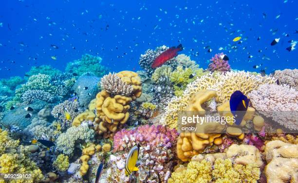 sea life on beautiful coral reef with lot of tropical fish in red sea - marsa alam - egypt - soft coral stock pictures, royalty-free photos & images