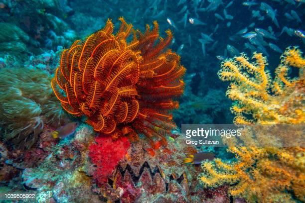 sea life on the great barrier reef - vida marítima fotografías e imágenes de stock