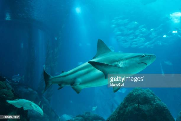sea life - sharks stock pictures, royalty-free photos & images