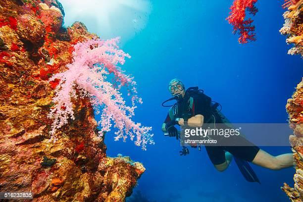 Sea life - Prickly alcyonarian