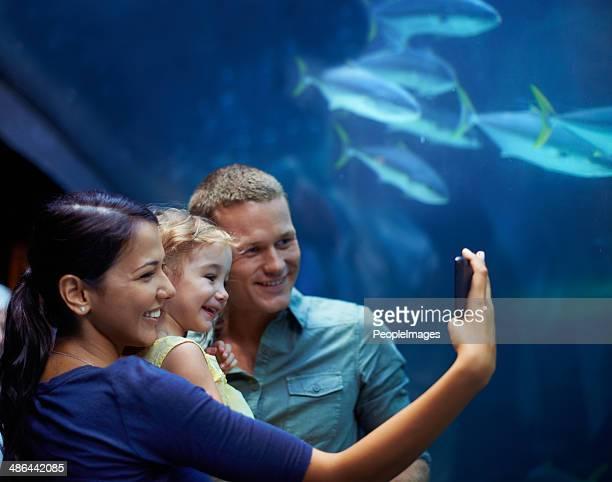Sea life selfies