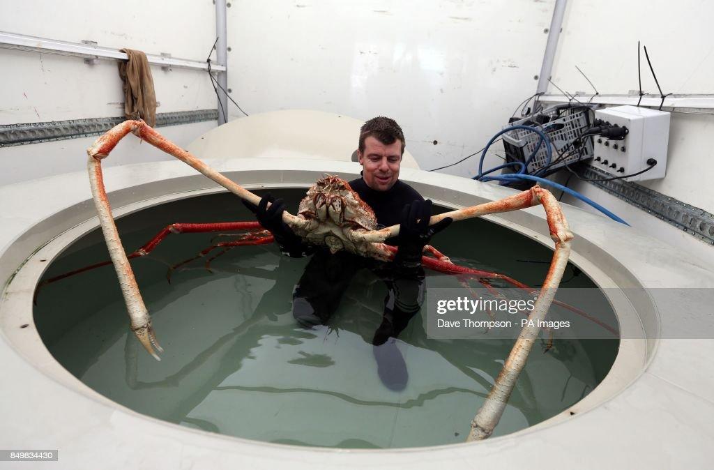 Europe's biggest crab : News Photo