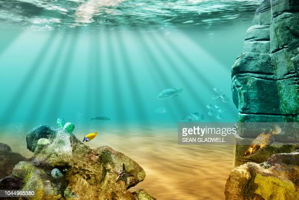 sea life under the ocean - beautiful bare bottoms stock pictures, royalty-free photos & images