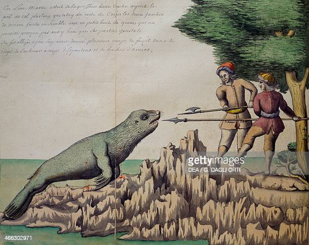 Sea lion hunt watercolour from the log book of De Beauchesne captain of the South Seas 16981701