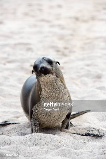A sea lion in San Cristobal, Galapagos Island