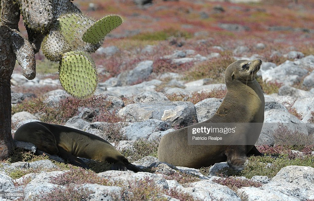 Galapagos Islands - Ecuador : News Photo