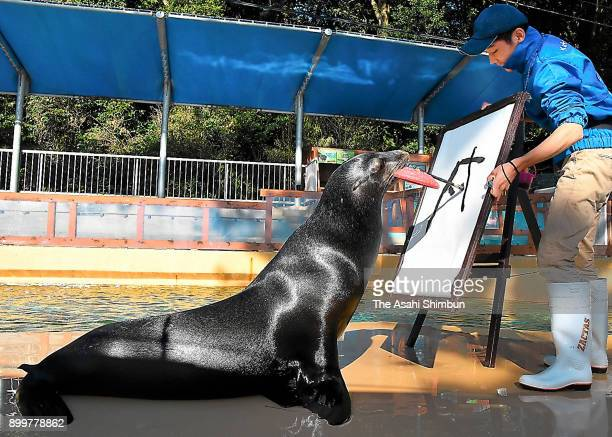 Sea lion Keita draws 'Inu' Next Year's zodiac sign in Chinese character at Katsurahama Aquarium on December 29 2017 in Kochi Japan