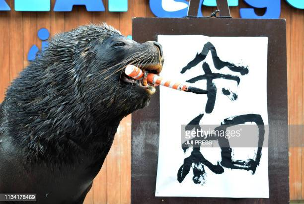 TOPSHOT Sea lion 'Leo' poses after writing the characters for the new era name Reiwa during a performance for assembled journalists and park visitors...