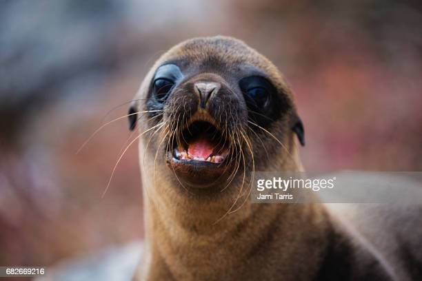A sea lion pup