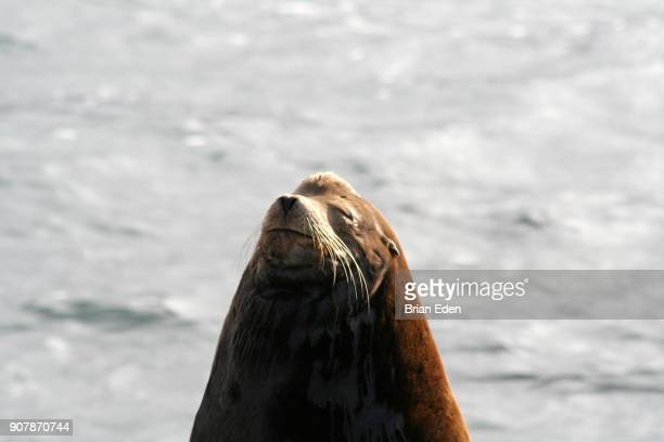 A sea lion sitting on the rocks in La Jolla, California
