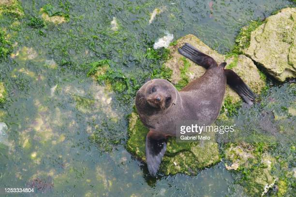 a sea lion staring at the camera - international landmark stock pictures, royalty-free photos & images