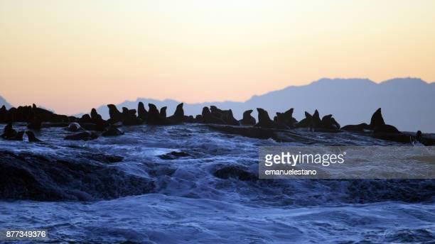 Sea Lions at dawn