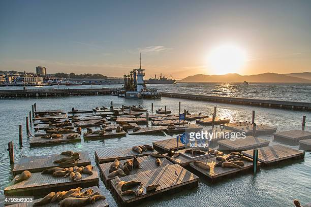 sea lions at pier 39 in san francisco - pier stock pictures, royalty-free photos & images