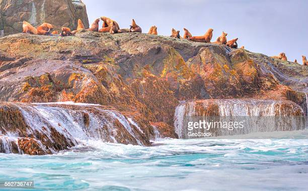 Sea lions congregate on a rocky island