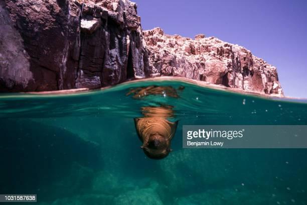 Sea Lions in La Paz