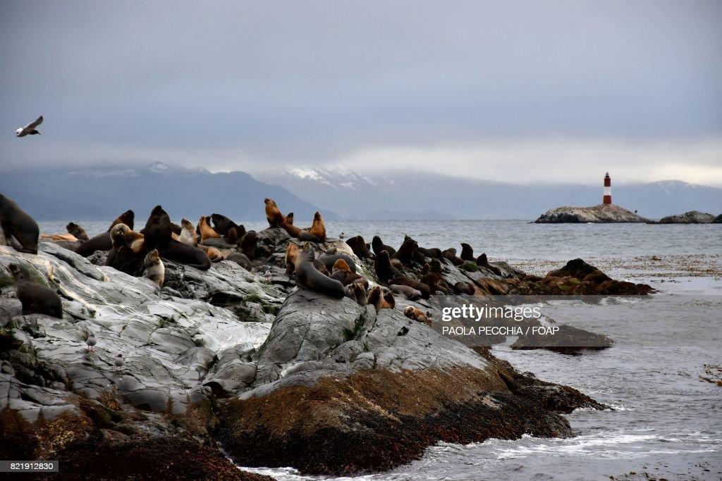 Sea lions on rocky coatline : Stock Photo