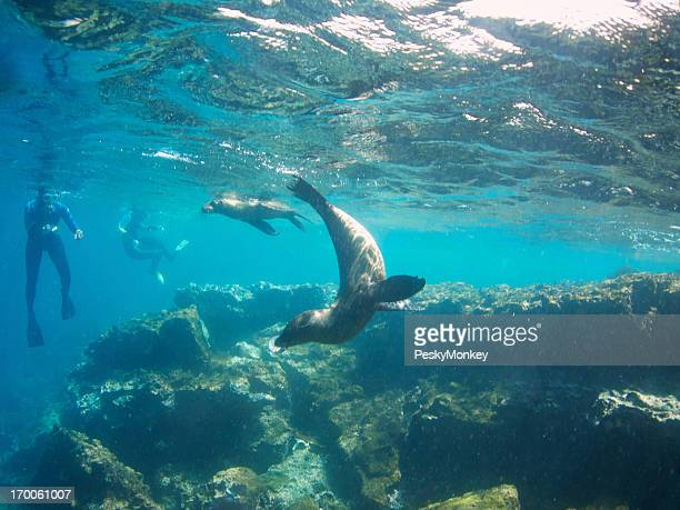Sea Lions Play with Snorkelers Galapagos Island Tour