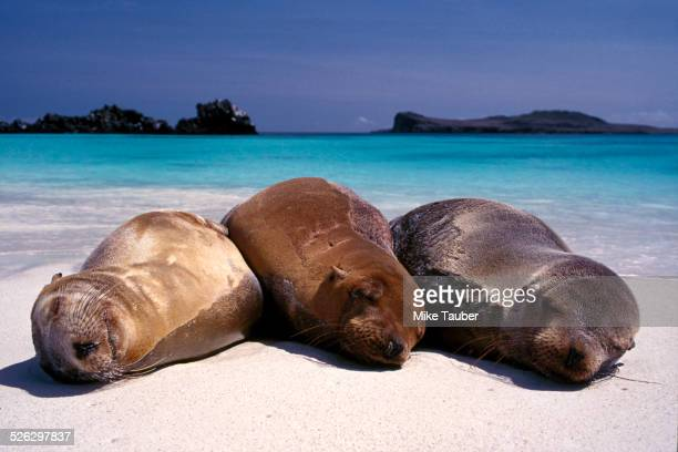 Sea lions sleeping on beach