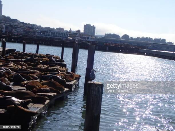 Sea lions sunbathing in pier 39, San Francisco