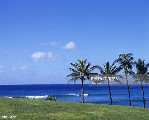 sea, oahu, hawaii islands - media_in_honolulu,_hawaii stock pictures, royalty-free photos & images