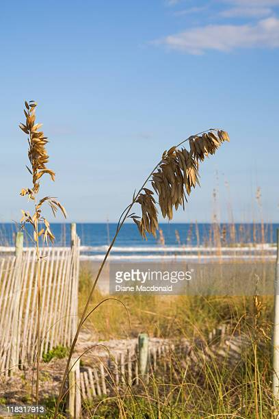 sea oats  at jacksonville beach, florida - jacksonville beach stock pictures, royalty-free photos & images
