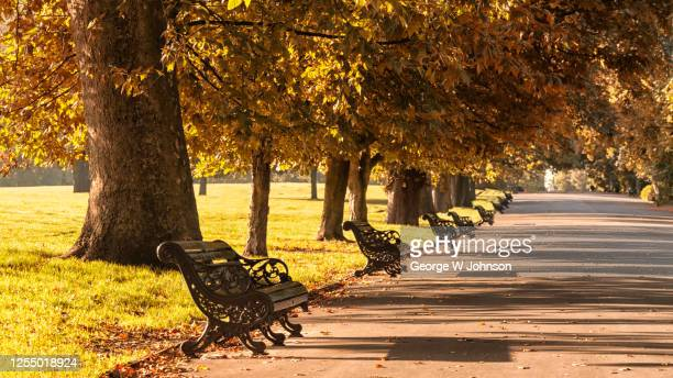 sea of autumn - park bench stock pictures, royalty-free photos & images