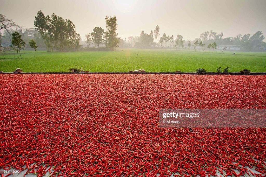 471461f6805f A sea of red chilli peppers drying at a factory Chili factory under ...