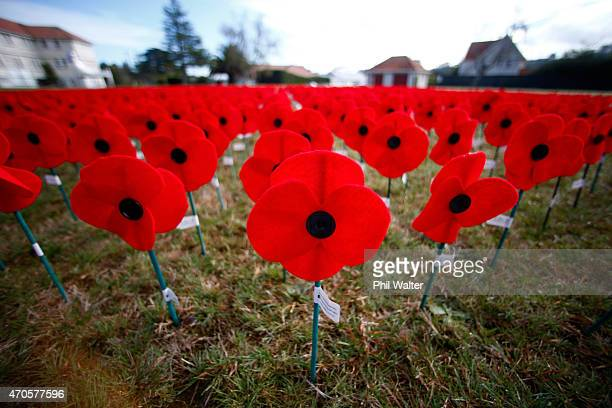 A sea of red poppies are pictured at the site of the former Royal New Zealand Air Force base at Hobsonville Point on April 22 2015 in Auckland New...