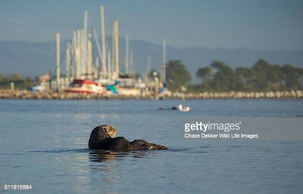 moss landing men View phone numbers, addresses, public records, background check reports and possible arrest records for mary larkin in moss landing, ca whitepages people search is the most trusted.
