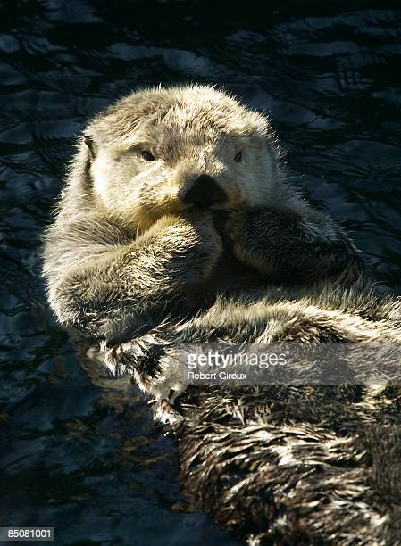 A sea otter relaxes in his Vancouver aquarium tank February 18 2009 in Vancouver British Columbia Canada Vancouver is the host city for the 2010...