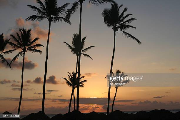 sea palms and sun - image title stock pictures, royalty-free photos & images