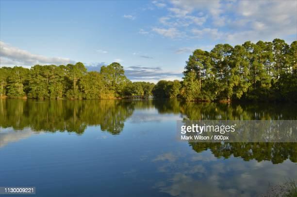 sea pines forest preserve - ヒルトンヘッド ストックフォトと画像