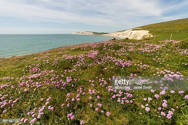 sea pinks and blue skies - s0ulsurfing stock pictures, royalty-free photos & images