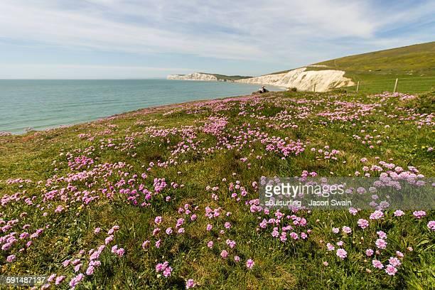 sea pinks and blue skies - s0ulsurfing stockfoto's en -beelden
