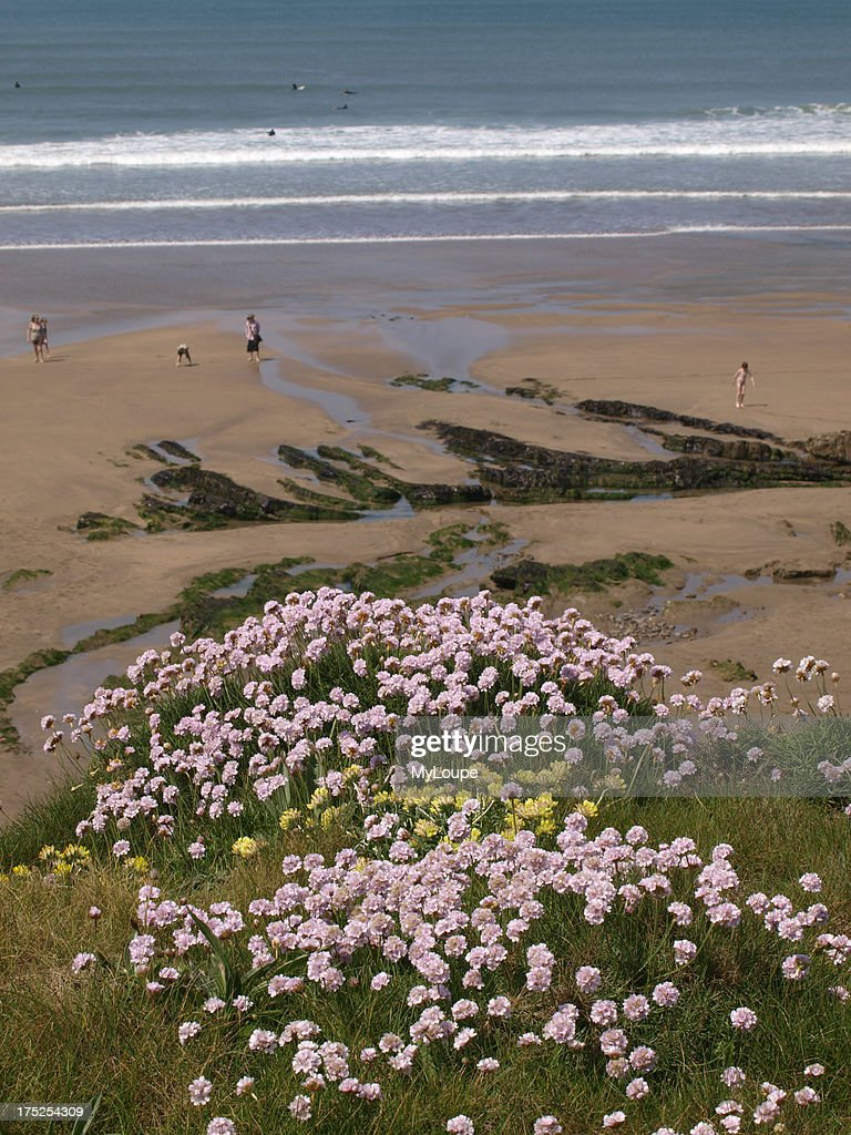 Sea Pinks On The Cliffs Cornwall Pictures Getty Images