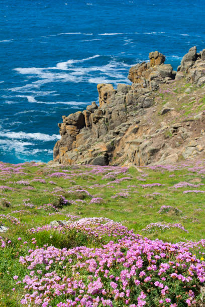 Sea pinks thrift flowers growing at gwennap head on the penwith sea pinks thrift flowers growing at gwennap head on the penwith peninsular in cornwall mightylinksfo