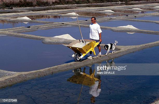 Sea Salt In Guerande France In September 1997