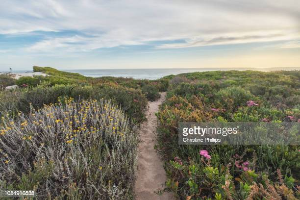 sea sand path through fynbos - fynbos fotografías e imágenes de stock