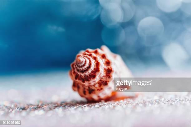 sea shell by the beach - marin livsmiljö bildbanksfoton och bilder