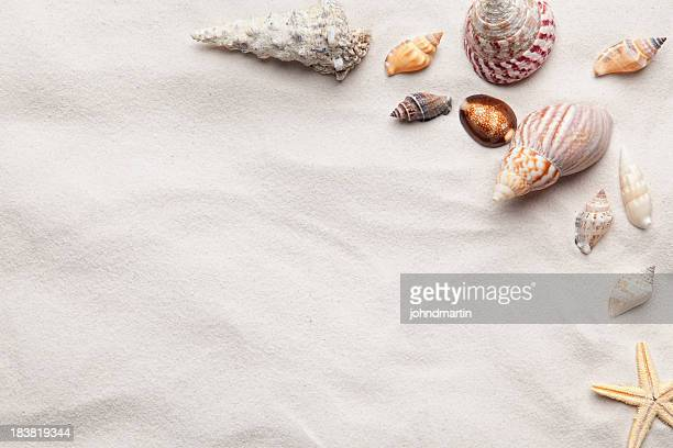 sea shell copy space scene - conch shell stock pictures, royalty-free photos & images