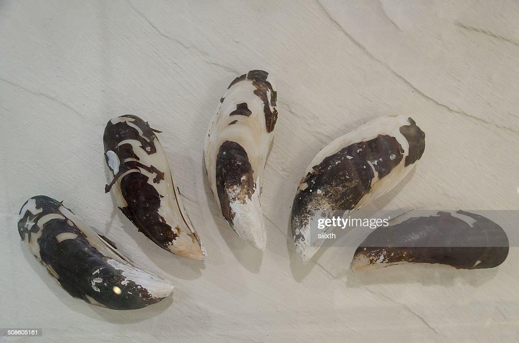 sea shell : Stock Photo